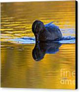 Dipping In Gold Canvas Print