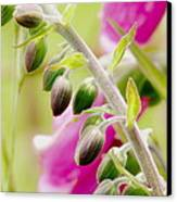 Discussing When To Bloom Canvas Print by Rory Sagner
