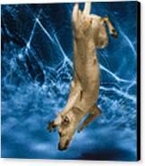 Diving Dog 2 Canvas Print by Jill Reger