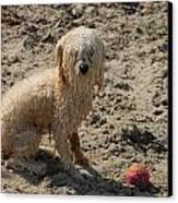 Dog 113 Canvas Print
