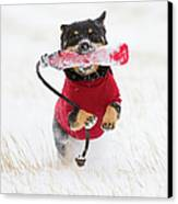 Dog Playing In Snow Canvas Print by Paws on the Run Photography