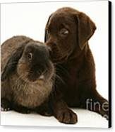 Dog Pup With Rabbit Canvas Print