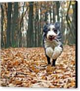 Dog Running In Forest Canvas Print