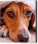 Dogs In Santa Hat Canvas Print