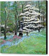 Dogwood In Springtime Canvas Print by Max Mckenzie