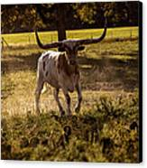 Don't Mess With Texas ..... Long Horns That Is  Canvas Print