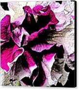 Double The Frill Canvas Print by Yvonne Scott
