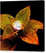 Dragon Plant Patronus Canvas Print by Michael Taggart