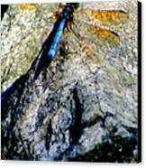 Dragonfly Blue Canvas Print by Maria Scarfone