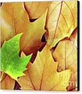 Dry Fall Leaves Canvas Print by Carlos Caetano