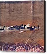 Ducks On Canvas Canvas Print by Douglas Barnard