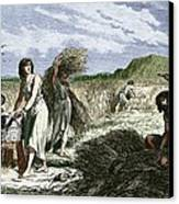 Early Humans Harvesting Crops Canvas Print