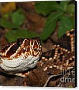 Eastern Diamondback Canvas Print by Lynda Dawson-Youngclaus