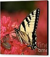 Eastern Yellow Tiger Swallowtail And Azaleas Canvas Print by Lara Ellis