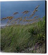 Edisto Oat Fields Canvas Print by Skip Willits