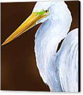 Egret Head Study Canvas Print by Kevin Brant