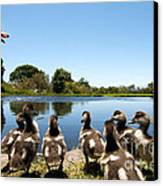 Egyptian Geese Canvas Print by Fabrizio Troiani