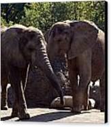 Elephants At The Pittsburgh Zoo Canvas Print by Stacy Gold