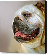 English Bulldog Willie In Profile Canvas Print by Dorothy Walker