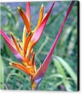 Enhanced Heliconia Canvas Print by Karen Nicholson