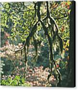 Epiphytic Moss Canvas Print by Doug Allan