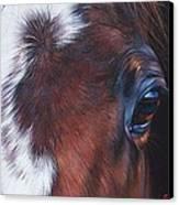 Equine 1 Canvas Print by Elena Kolotusha