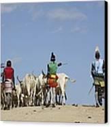 Ethiopia, Hamer Tribe Herding Cattl Canvas Print by Photostock-israel