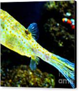 Exotic Fish Canvas Print by Pravine Chester