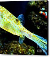 Exotic Fish Canvas Print