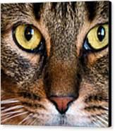 Face Framed Feline Canvas Print by Art Dingo