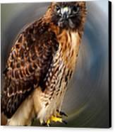 Falco 2 Tinnunculus Vf Canvas Print