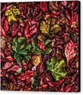 Fall Autumn Leaves Canvas Print by John Farnan