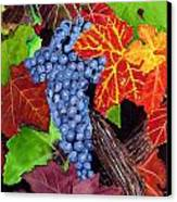 Fall Cabernet Sauvignon Grapes Canvas Print by Mike Robles