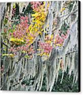 Fall Colors In Spanish Moss Canvas Print