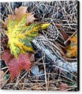 Fall Forest Floor Canvas Print by Will Borden
