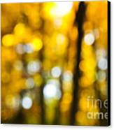 Fall Forest In Sunshine Canvas Print