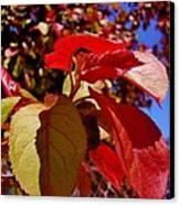Fall Leaves Canvas Print