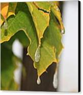 Fall Leaves And Icicles Canvas Print by Cynthia  Cox Cottam