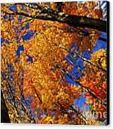 Fall Maple Treetops Canvas Print by Elena Elisseeva