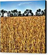 Fall Soy Field Canvas Print by Dan Crosby