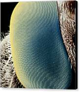False-colour Sem Of A Hover Fly's Eye Canvas Print by Dr Jeremy Burgess