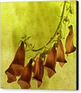 Fancy Foxglove Canvas Print by Bonnie Bruno