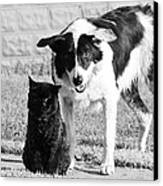 Farm Cat And Border Collie Canvas Print by Thomas R Fletcher