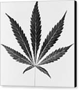 Federal Bureau Of Narcotics Canvas Print by Everett