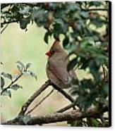 Female Cardinal Canvas Print by Ron Smith
