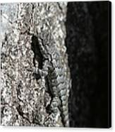 Fence Lizard Canvas Print by Sean Green
