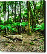 Fern Grove Canvas Print