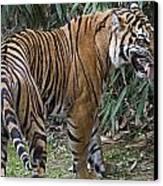 Ferocious Tiger Canvas Print by Brendan Reals