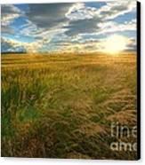 Fields Of Gold Canvas Print by John Kelly