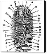 Fingerprint Diagram, 1940 Canvas Print